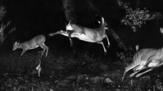 """Alfred Ehrhardt Stiftung 