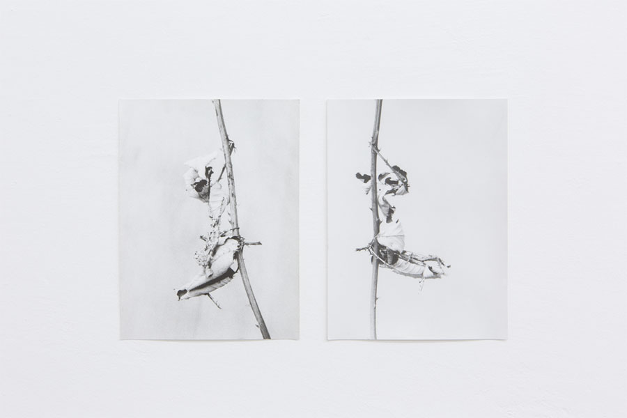 Works: © Jochen Lempert, Installation View At Between Bridges: Phasmiden/Phasmids, 2013