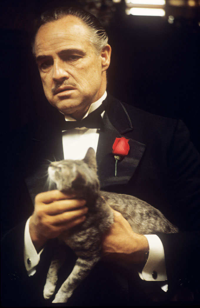 "© STEVE SCHAPIRO, MARLON BRANDO AND THE CAT IN THE FILM ""THE GODFATHER"", NEW YORK, 1971"