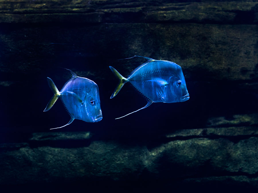 Two Fishes, From The Series Animals Doing Their Thing, 2014 © Juliane Eirich