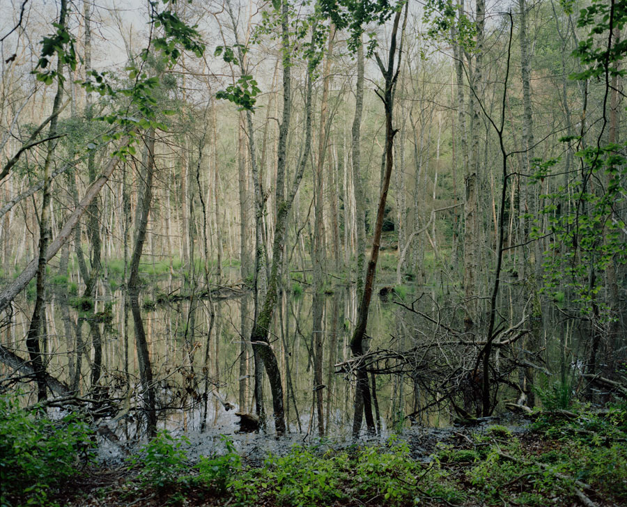 An Impenetrable Forest, 2013 © Mike Chick