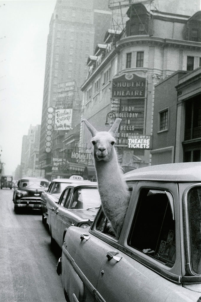 © Inge Morath / Magnum Photos, A Llama In Times Square, 1957