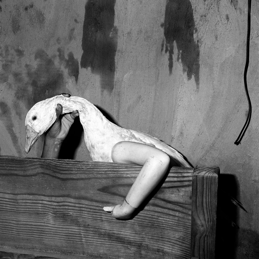 One Arm Goose, 2004 © Roger Ballen
