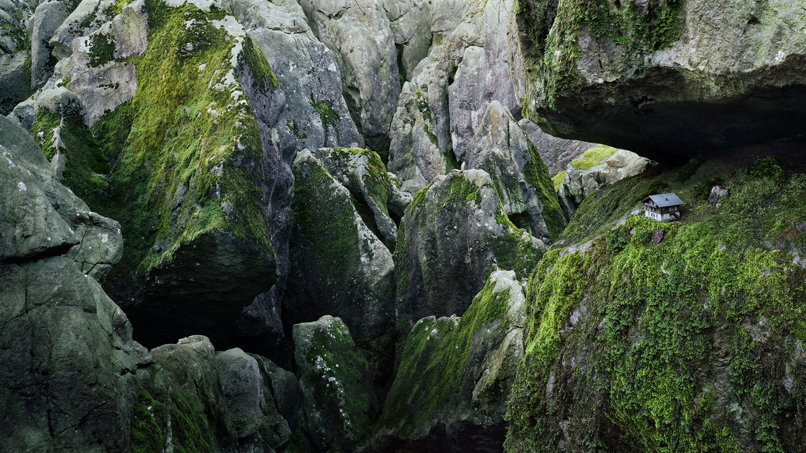 Alfred Ehrhardt Foundation |»Models Of Nature In Contemporary Photography«