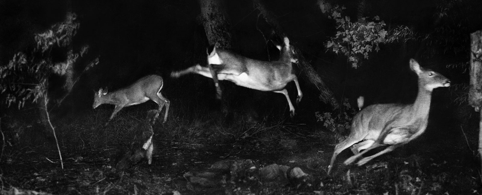 """Alfred Ehrhardt Stiftung   Presentation: Sonia Voss """"Hunting Wild Life With Camera And Flashlight. George Shiras (1859-1942), Pionier Der Wildlife Photography"""""""