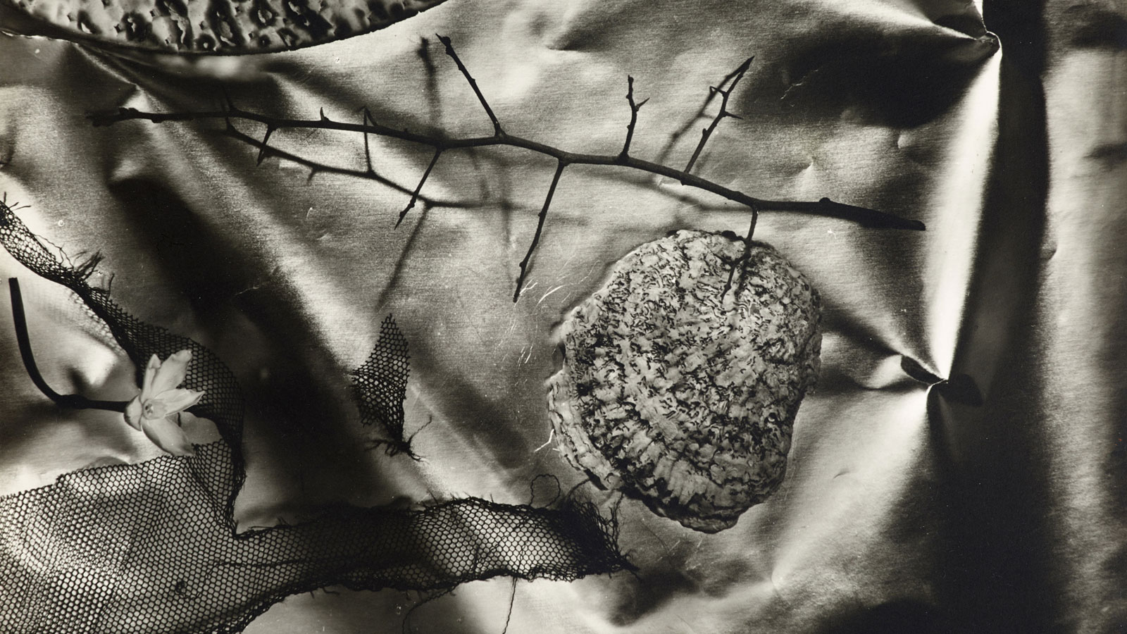 Alfred Ehrhardt Foundation | »NAUTILUS. Snails, Mussels, And Other Mollusks In Photography«